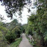 Christianian rannan puolella on kivoja metsäisiä polkuja joita voi kävellä.