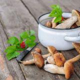 Sieni-ihmisten päivänä juhlitaan ruokasieniä