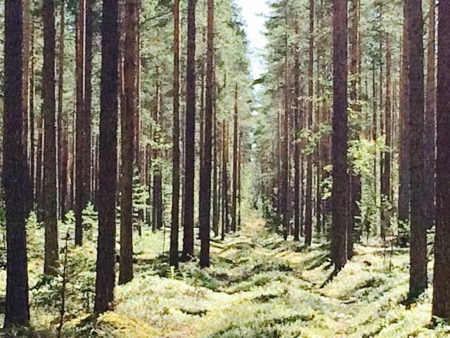 """""""Niin metsä vastaa kuin sinne huudetaan."""""""
