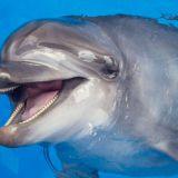 Tampereen delfiinit muuttavat: turvakotiin vai toiseen delfinaarioon?