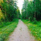 Kauniita maisemia metsästä.