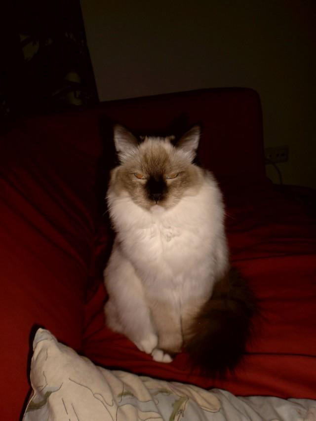 On mukavaa, kun kissa arvostaa paneutumistasi..