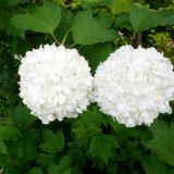 Pompomit vai kukkaisrintaliivit?