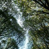Kuinka usein tulet katsoneeksi puiden latvoja?