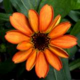 Avaruuden ensimmäinen kukka