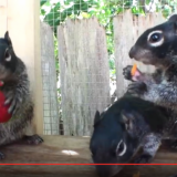 """Kuvakaappaus videosta """"Orphaned baby squirrels rescued / Vet Ranch"""""""