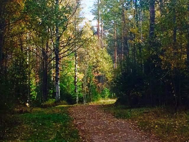Lokakuussa luonto alkaa jo valmistautua talveen.
