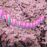 Mene: Japanilainen kirsikankukan juhla