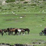 Kazakki paimentaa hevosiaan. Osa Kazakeista paimentaa hevosella ratsastaen, osa paimentaa mopolla.