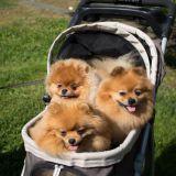 Suloiset koirakaverit valtasivat Kaivopuiston