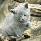 Pitäisikö kissat tunnusmerkitä ja rekisteröidä? – ainakin 20 000 hylättyä kissaa vuodessa on ihan liian paljon