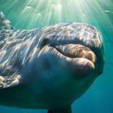Särkänniemen delfiinit saattavat päätyä Kreikkaan – suojeluverkosto huolissaan