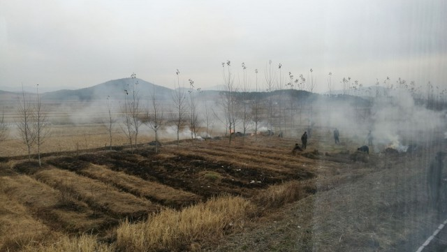 Pellolla kaskeamispuuhissa. Kaskeaminen parantaa maan ravinnepitoisuutta seuraavaa kasvukautta varten.