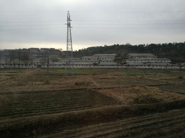 Pellot pidetään ojennuksessa käsi- ja eläinvoimin. Taustalla tyypillistä Pohjois-Korealaista arkkitehtuuria.