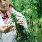 Kannabisvihaajien sielunelämästä