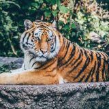 Villit tiikerit, Isopandat ja muurahaiskävyt kiittävät luonnonsuojelun mahtavista saavutuksista