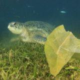 Lopeta turha pillien imeminen ja muoviroskan kulutus – vai jätetäänkö meret toukkien pelastettavaksi?