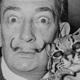 Legendaarinen kuvataiteilija Salvador Dalí kaivetaan haudasta