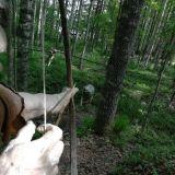 Jousipyssyllä sai metsästettyä aterian jos ansa ei tepsinyt.