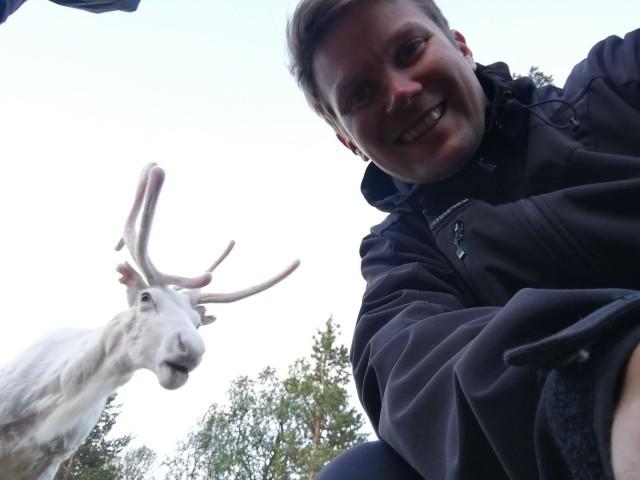 Poro on kesypeura. Peuran metsätys on vähentynyt ja poroja kasvatetaan pohjoisemmassa Suomessa.