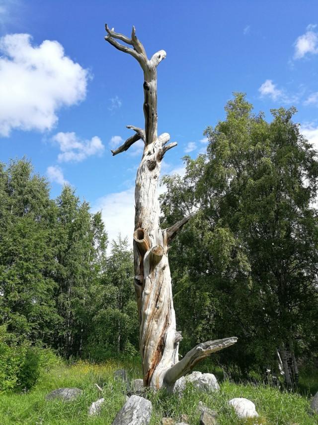 Kalevalassa (nykyisin Venäjän puolella) Lönnrotin mänty. Perimätiedon mukaan Elias Lönnrot merkitsi muistiin runoja karjalaisilta runonlaulajilta 1834.