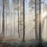 Jos metsään haluat mennä nyt, se kannattaa