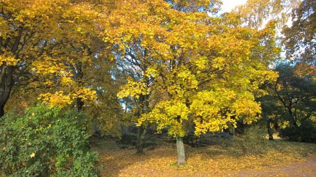 Keltaisessa puistossa virkistyy