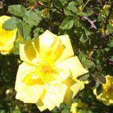 Voimaannuttava keltainen