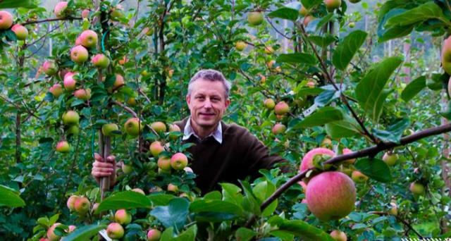 Rikard Korkman omenatilallaan Espoossa.