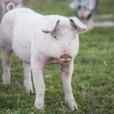 Eläinten ääni -mielenosoitus ottaa kantaa uuteen eläinsuojelulakiin