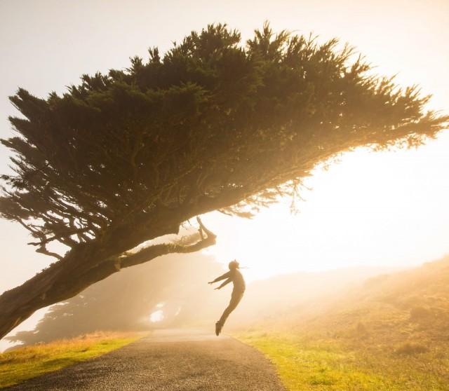 Idea puun muodosta voi saada valokuvaajalle aikaan toimintaa kuten tässä Stephen Leonardin teoksessa.