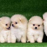 Barbra Streisand kloonasi kuolevan koiransa