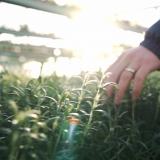 """Puutarhayrittäjä Liisa Lindroth: """"Toivoisin, että koko ketju viljelijöistä kuluttajaan arvostaisi tuotetta"""""""