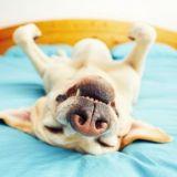 Päiväunet ilman unenpöpperöä? Juo kahvit ennen torkkuja