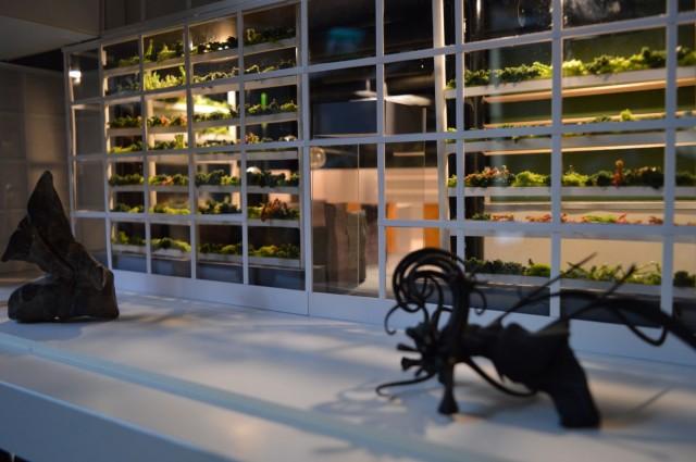 Kasvihuoneet sijoitetaan ravintolan alasalin ikkunoiden viereen. Kuvassa pienoismalli.