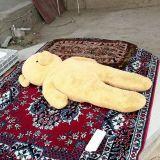 Turkmenistanilainen nalle päiväunilla.