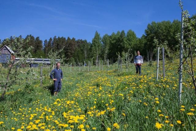 Tuomas ja Iiris Mattila maatilallaan omenatarhassa.