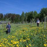 WWF palkitsi ympäristölle ystävällisen maatilan – luomutila taistelee Itämerelle ystävällisesti hellettä vastaan