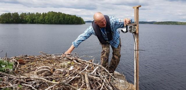 Luontokuvaaja Juha Taskinen kävi asentamassa kameran sääksen pesään.