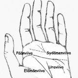 Käden viivat