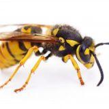 Kun ihminen kohtaa hyönteisen – vastaa kyselyyn ja kerro, mikä on paskin hyönteinen
