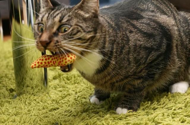 Mauri innostui banaaneista jo ennen kuin siitä tuli buumi.