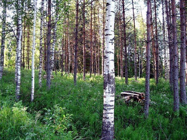 Metsä on avoin paikka kaikille.