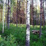 Merkkaa metsäkäyntisi laskuriin – Suomalaiset jokamiehenoikeudet Unescon luetteloon