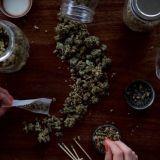 Kanada laillisti kannabiksen – 30 gramman hallussapito ja pienimuotoinen kotikasvatus on jatkossa sallittua, kauppa käy vain luvan kanssa