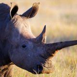 WWF:n raportti: Maapallon eläinten määrä romahtanut hälyttävää tahtia –60 prosenttia selkärankaisista on mennyttä