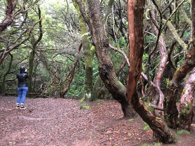 Anagan metsät tarjoavat upeat puitteet patikkaretkelle.