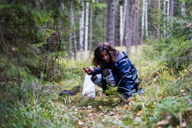 Kaisla Rantala poimi syksyllä suppilovahveroita Magun keittiöön.