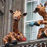 Museon parvekkeelta tutut kahvittelevat kirahvit muuttavat Sompasaunalle, jossa on luvassa myös kesäbileet