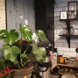 Raakakakkuja ja käsin uutettua kahvia – Vegaaniystävällinen Roowi on Iso Roban uusi kahvilatulokas